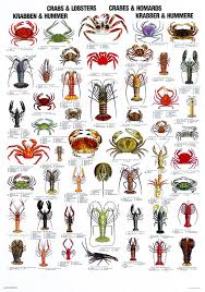crabs and lobsters