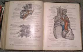 insan anatomisi resim