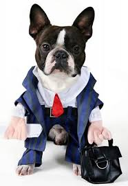 boston terrier costume