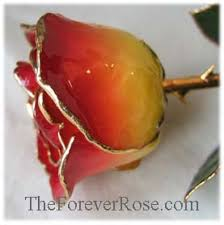 red gold rose