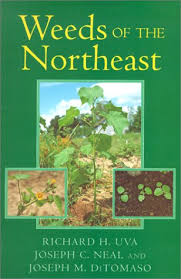 northeast weeds