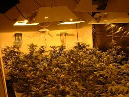 indoor growing room