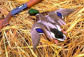 duck hunting photo