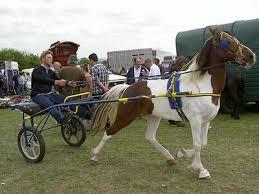 gypsy trotting horses