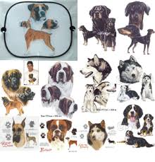 dog breed pic