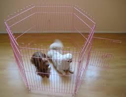 exercise dog