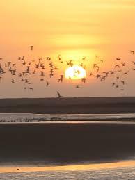 migrating birds pictures