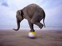 animation elephant