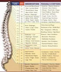 nerves of the back