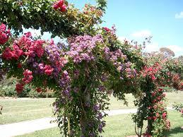 garden victoria
