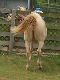 mare winking