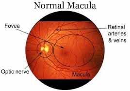 macular eyes