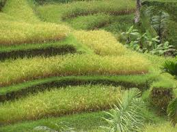 green terraces