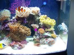 cube reef tank