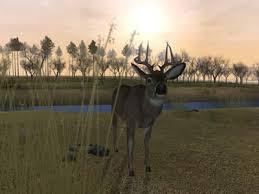 deer hunter 2005 pc