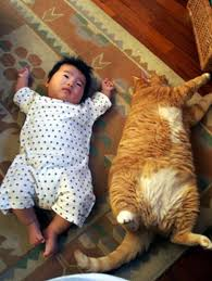 baby cat pictures