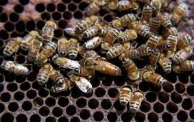 bee hive picture