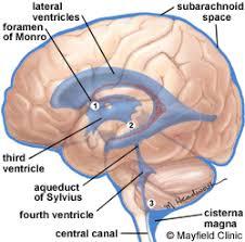 inside the brain