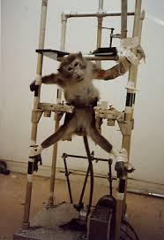 lab monkey