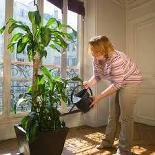houseplant images
