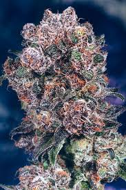 blueberry seed