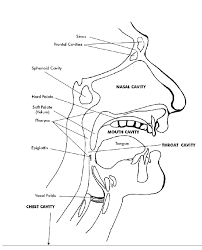esophagus diagram