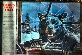 information about bear
