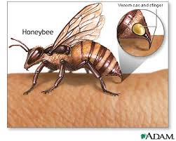 picture of insect