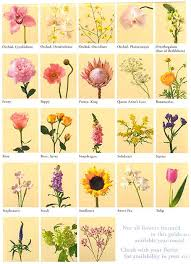 flowers and their meaning