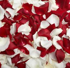 rose petals images