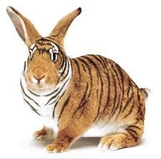 run tiger