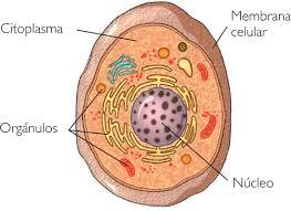 partes de las celulas