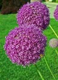 flower pom pom