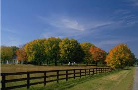 agriculture farms
