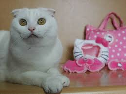 hello kitty costume for cats