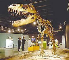 dinosaurs museum