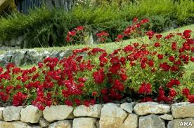 low maintenance landscape ideas