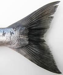 fish tail fin