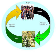 ecological sanitation