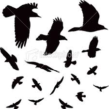 bird silhouette art