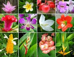 flowers of thailand