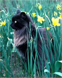 longhaired cats
