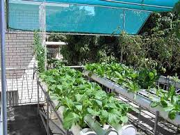 home made hydroponic systems