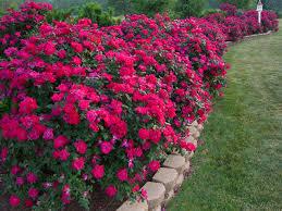corner flower beds