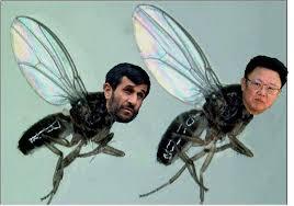 pesky flies