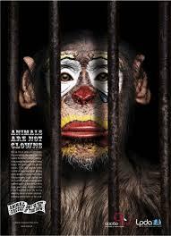 animal campaigns