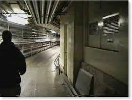 disney underground