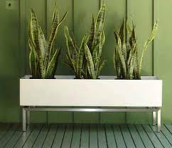 long planter box