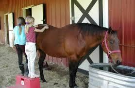 horse brushing
