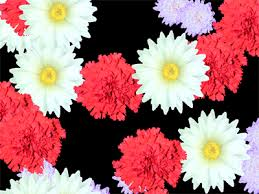 flowers screen saver